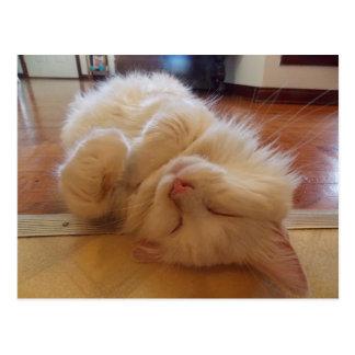 sweetie sleeping postcard