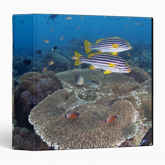 Sweetlip Fish Binder