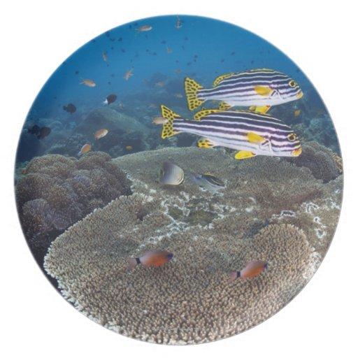 Sweetlip Fish Dinner Plates
