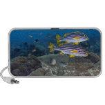 Sweetlip Fish iPhone Speakers