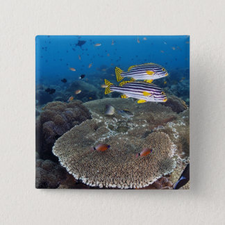 Sweetlip Fish Pinback Button