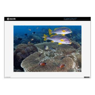 """Sweetlip Fish 15"""" Laptop Skin"""