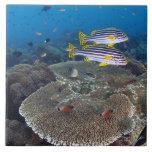 Sweetlip Fish Tiles