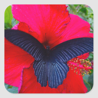 Sweetly - Butterfly Square Sticker