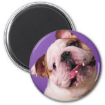 Sweetness is a Bulldog 2 Inch Round Magnet