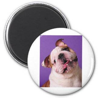 Sweetness is a Bulldog Magnet
