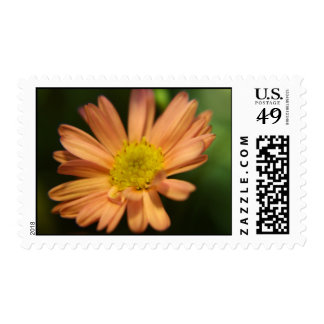 Sweetness Postage Stamps