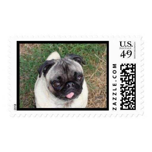 Sweetness Postage Stamp