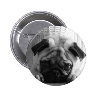 SweetPea Pugs Pinback Button