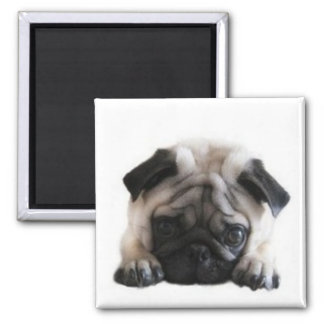 SweetPea Pugs Square Fridge Magnet