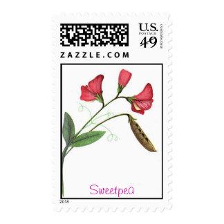 Sweetpea Stamp