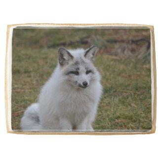 Swift Fox Jumbo Cookie