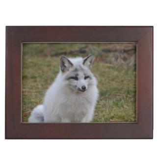 Swift Fox Memory Boxes
