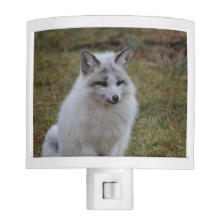 Swift Fox Nite Lites