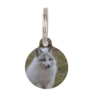 Swift Fox Pet Nametag