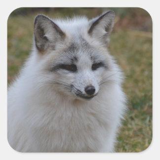 Swift Fox Square Sticker