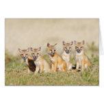 Swift Fox (Vulpes macrotis) young at den burrow, 2 Card