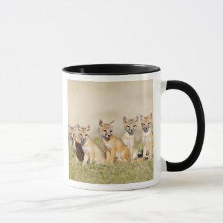 Swift Fox (Vulpes macrotis) young at den burrow, 2 Mug