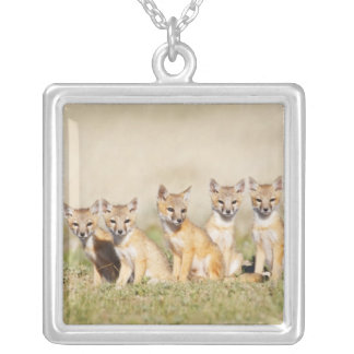 Swift Fox (Vulpes macrotis) young at den burrow, 2 Silver Plated Necklace