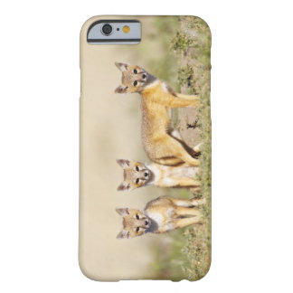 Swift Fox (Vulpes macrotis) young at den burrow, 3 Barely There iPhone 6 Case