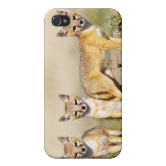 Swift Fox (Vulpes macrotis) young at den burrow, 3 iPhone 4/4S Case