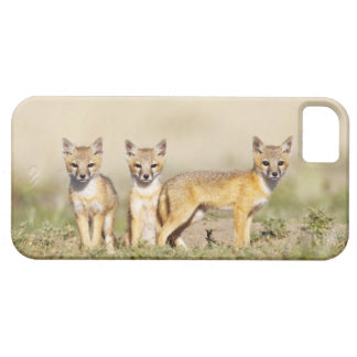 Swift Fox (Vulpes macrotis) young at den burrow, 3 iPhone SE/5/5s Case