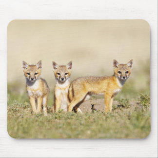 Swift Fox (Vulpes macrotis) young at den burrow, 3 Mouse Pad