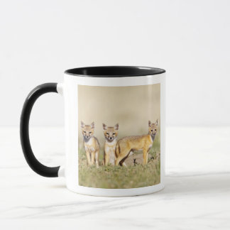 Swift Fox (Vulpes macrotis) young at den burrow, 3 Mug