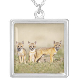 Swift Fox (Vulpes macrotis) young at den burrow, 3 Silver Plated Necklace