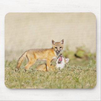 Swift Fox (Vulpes macrotis) young at den burrow, 4 Mouse Pad