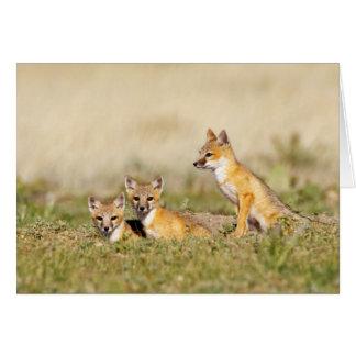 Swift Fox (Vulpes macrotis) young at den burrow, 5 Card