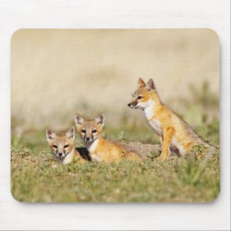 Swift Fox (Vulpes macrotis) young at den burrow, 5 Mouse Pad