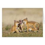 Swift Fox (Vulpes macrotis) young at den burrow, Card