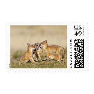 Swift Fox (Vulpes macrotis) young at den burrow, Stamps
