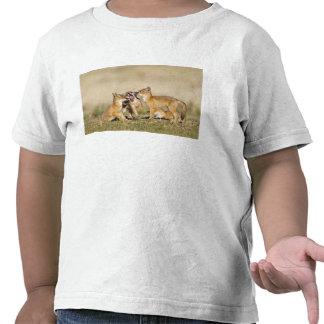 Swift Fox Vulpes macrotis young at den burrow Shirt