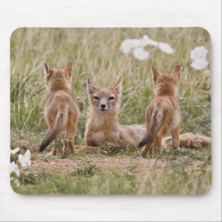 Swift Fox (Vulpes velox) female with young at Mouse Pad