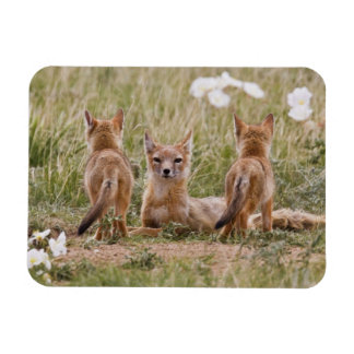 Swift Fox (Vulpes velox) female with young at Rectangular Photo Magnet