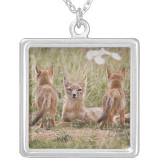 Swift Fox (Vulpes velox) female with young at Silver Plated Necklace