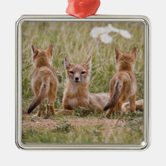 Swift Fox (Vulpes velox) female with young at Square Metal Christmas Ornament