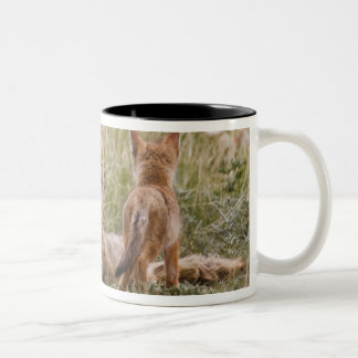 Swift Fox (Vulpes velox) female with young at Two-Tone Coffee Mug