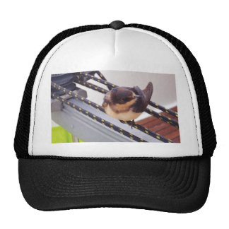 Swift Migrating By Yacht Trucker Hats