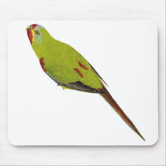 Swift Parrot - Lathamus discolor Mouse Pad
