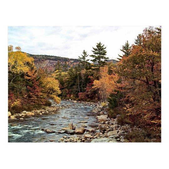 Swift River Autumn Postcard
