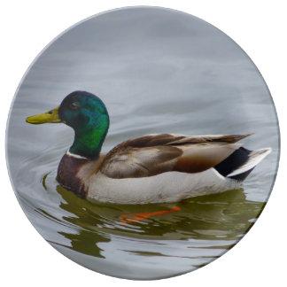 Swim Mallard Swim Porcelain Plate