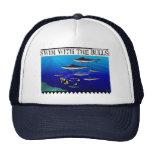 Swim with the Bulls Hat