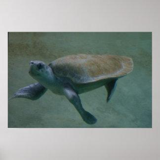Swimmin Póster