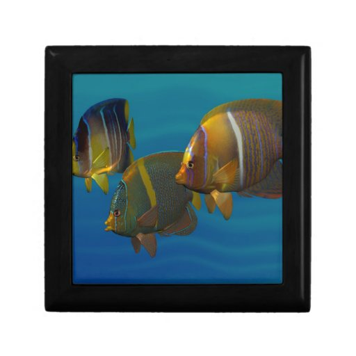 Swimming Angelfish Gift Boxes