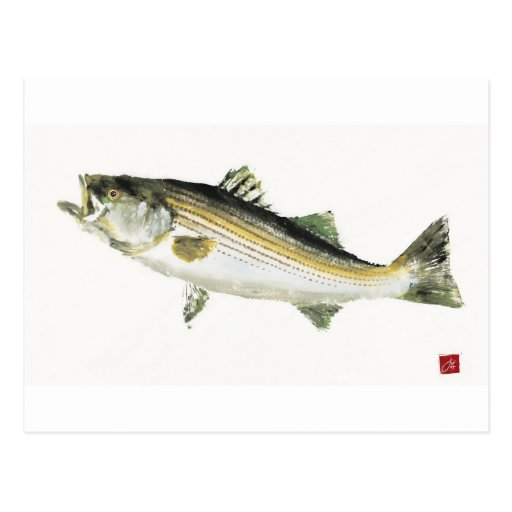 Swimming Bass Postcard