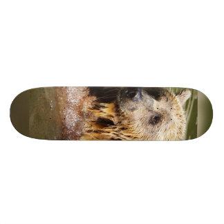 swimming bear skate board deck