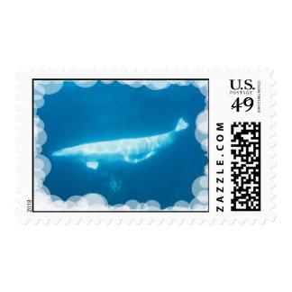Swimming Beluga Whales Postage Stamp